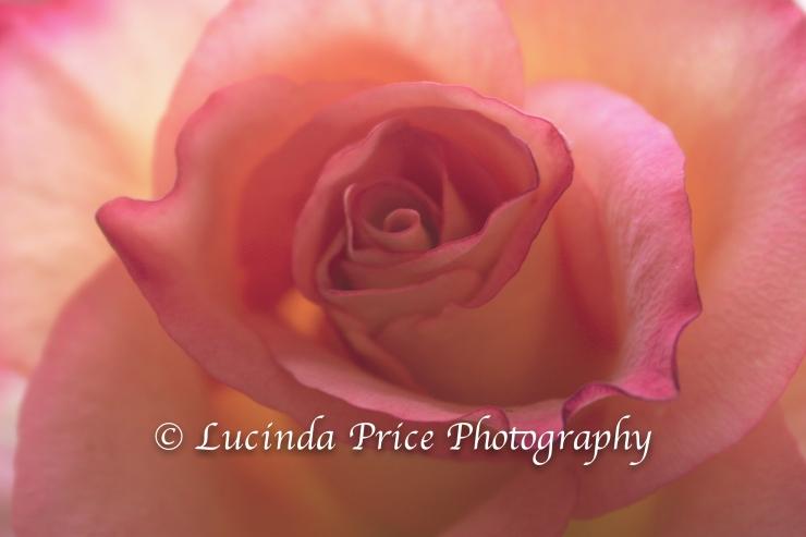 Rose Lucinda Price